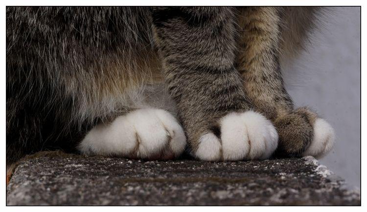 Luvas brancas - cat, animal, pets - jsuassuna | ello