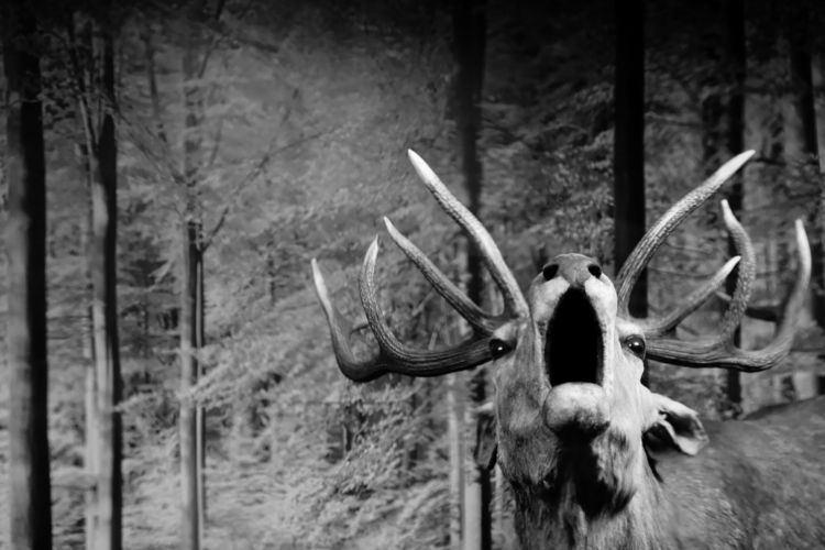 Shout - photography, animal, museum - marcushammerschmitt | ello