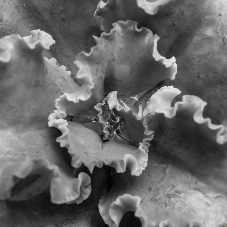 Succulent Series 2 - 8, abstract - chrishuddleston   ello