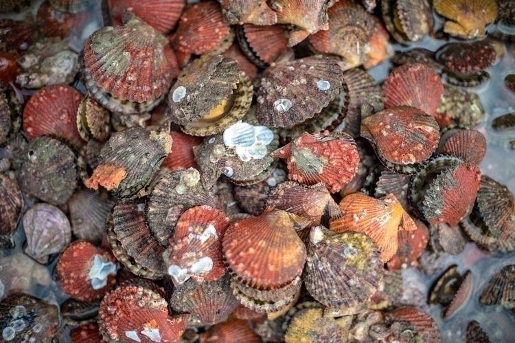 market part II - vietnam, seafood - lutzewild | ello
