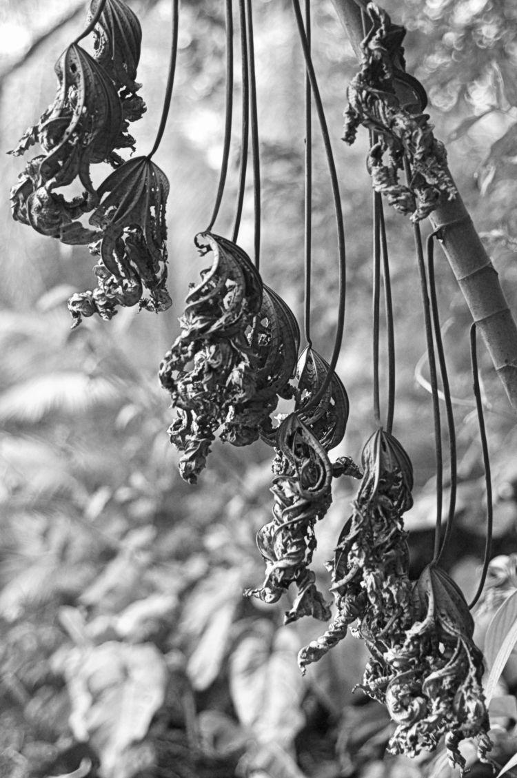 Após Geada - leaf, leaves, folha - jsuassuna | ello
