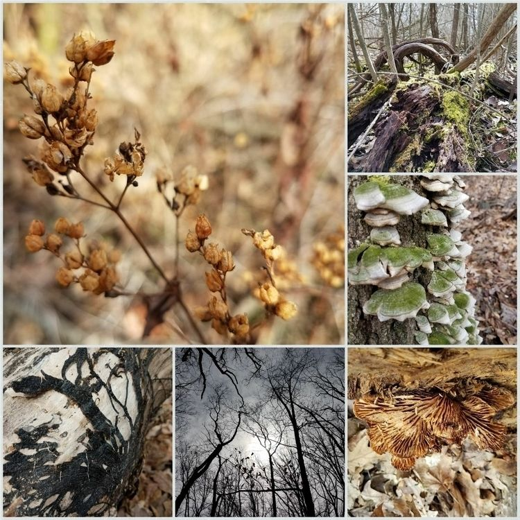 Lindenwood Nature Preserve - Da - creativecatsociety | ello