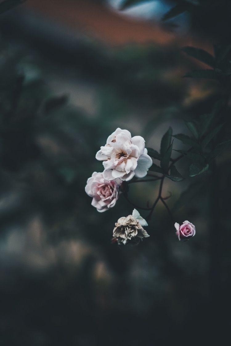 flowers, flower, nature, mood - perchekindustrie | ello