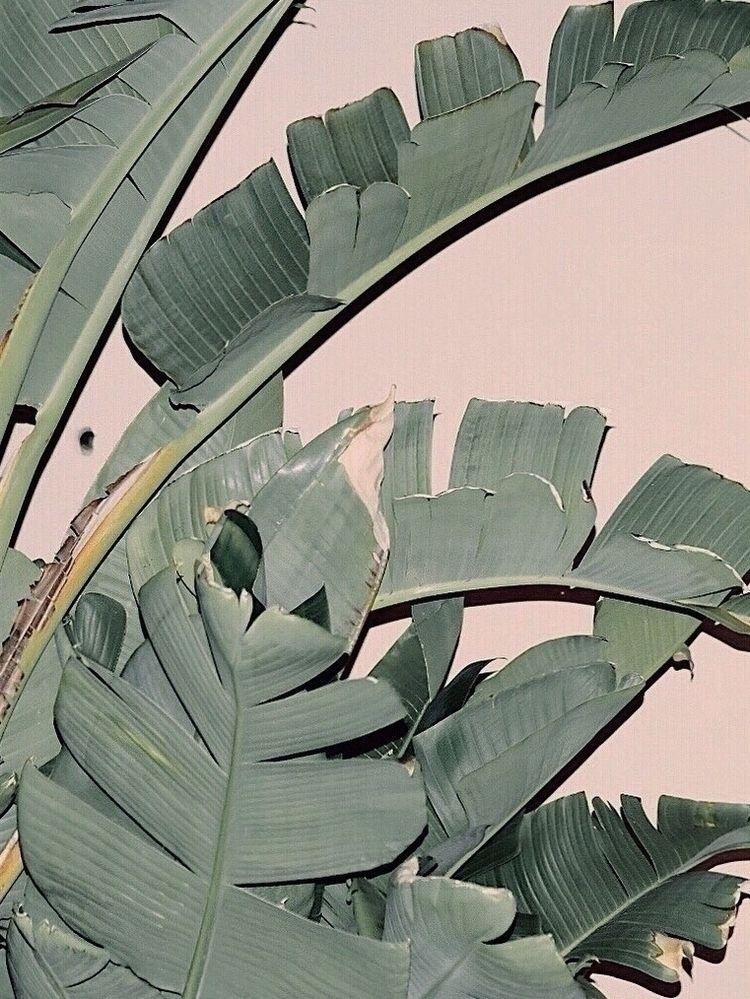 Panic, Organic! — Triptych Set  - veefulness | ello