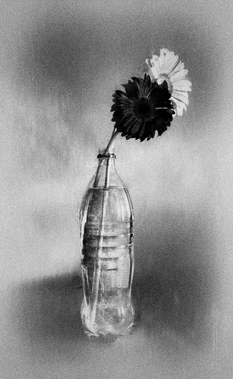 Flowers bottle - photography, ello - elhanans | ello