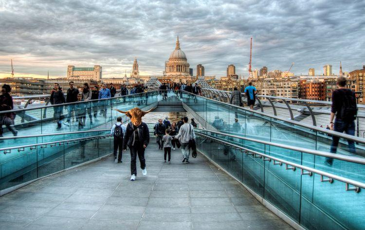 London Moooves Moo - milleniumbridge - neilhoward | ello