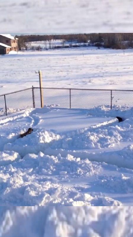 Built Snow Maze Dog, Watch Reac - natureaddicted | ello
