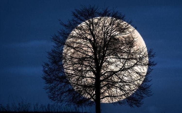 Moonlight kind face soporific s - artofmindartofsight | ello