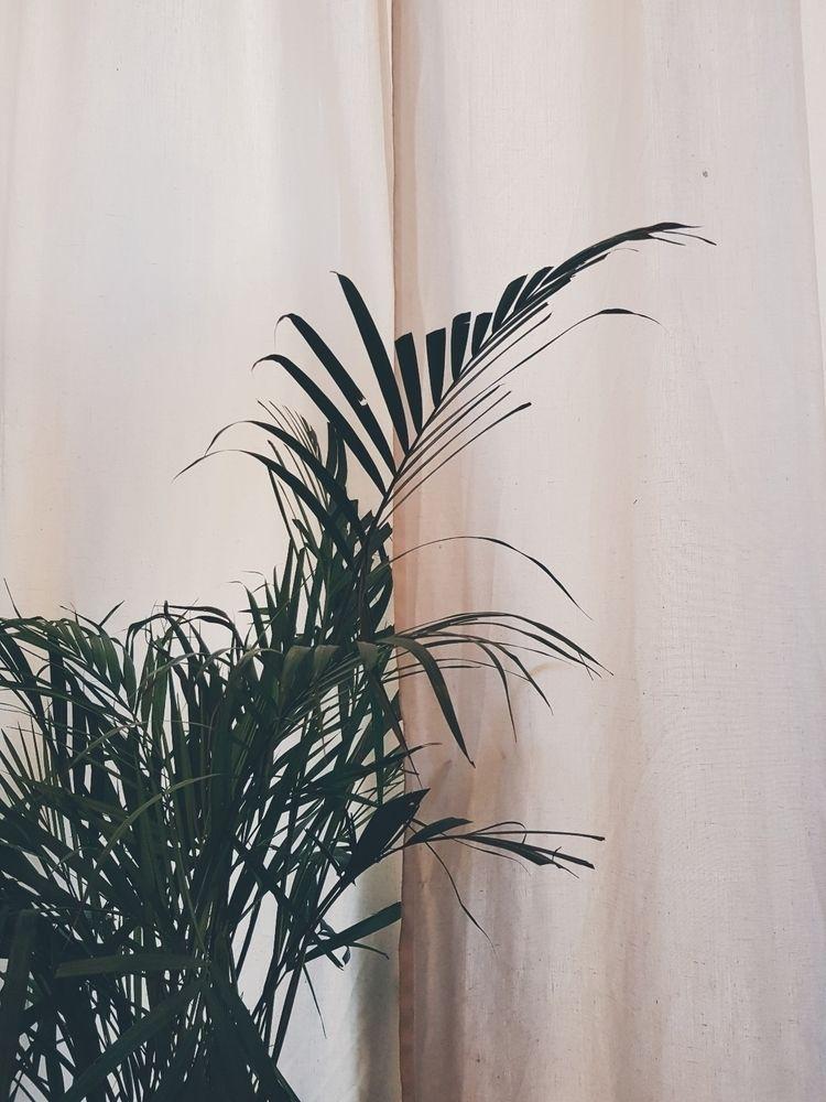 Plant - giangian | ello