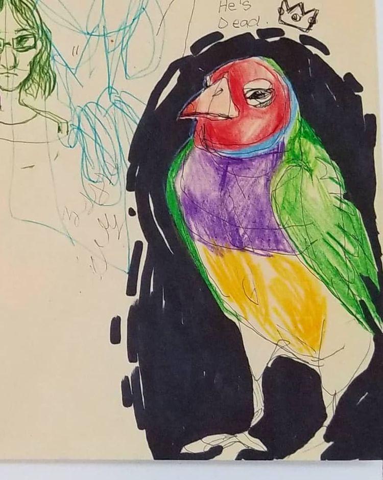 Gouldian Finch Sketch pencil cr - sarafina_collura | ello