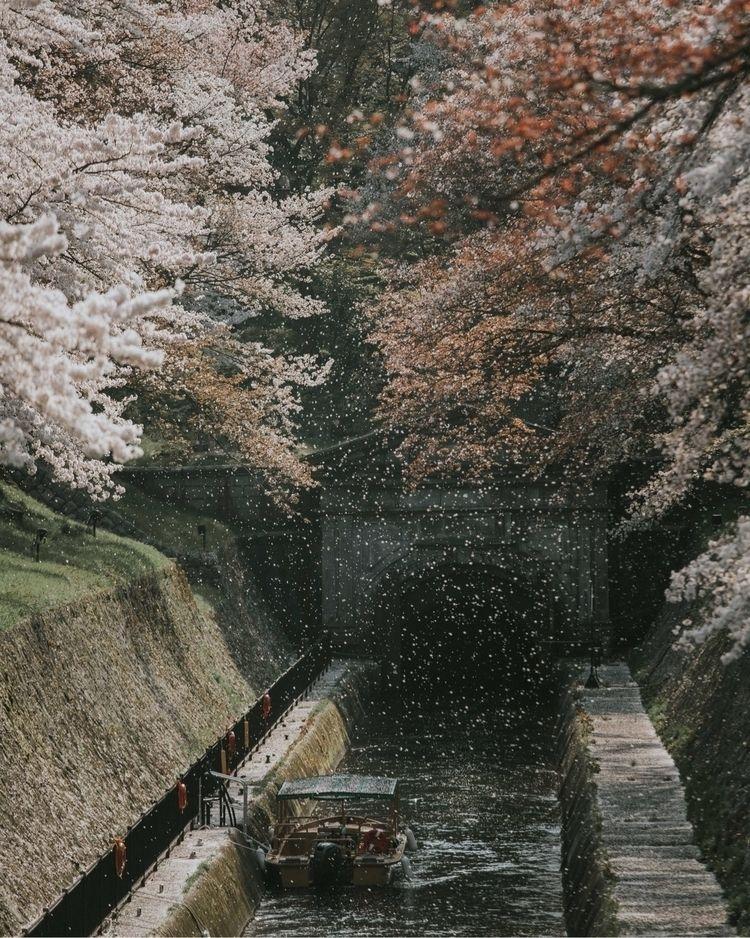 sakura Otsu, Shiga - swei_ | ello