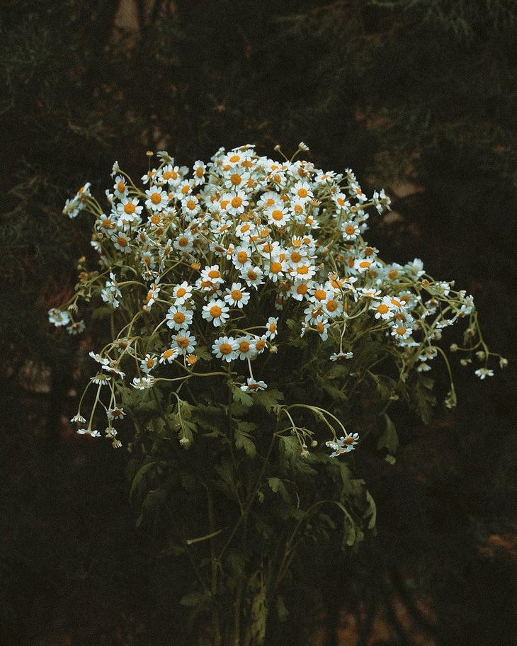 arms:two_hearts - chamomile, thepieholephotography - thepieholephotography | ello
