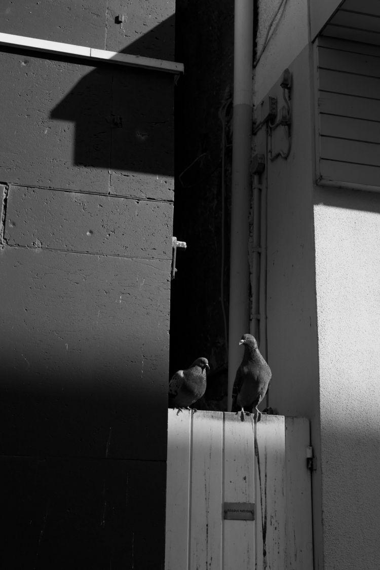 Conspiracy - photography, blackandwhite - marcushammerschmitt | ello