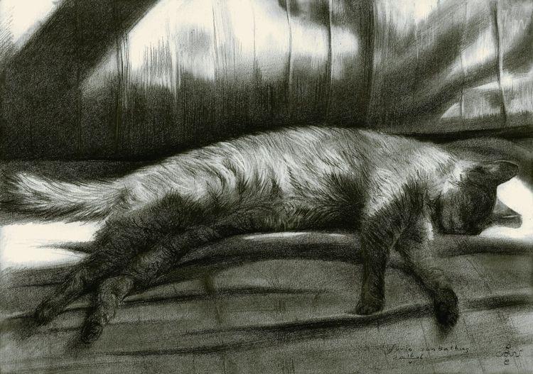Furia sunbathing - 16-05-16 Gra - corneakkers | ello