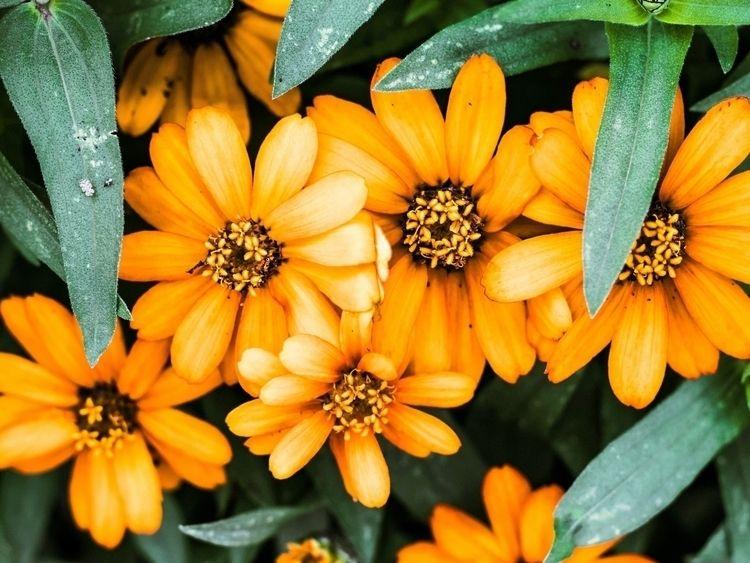 Orange Pedals Websites/portfoli - richpointofview | ello
