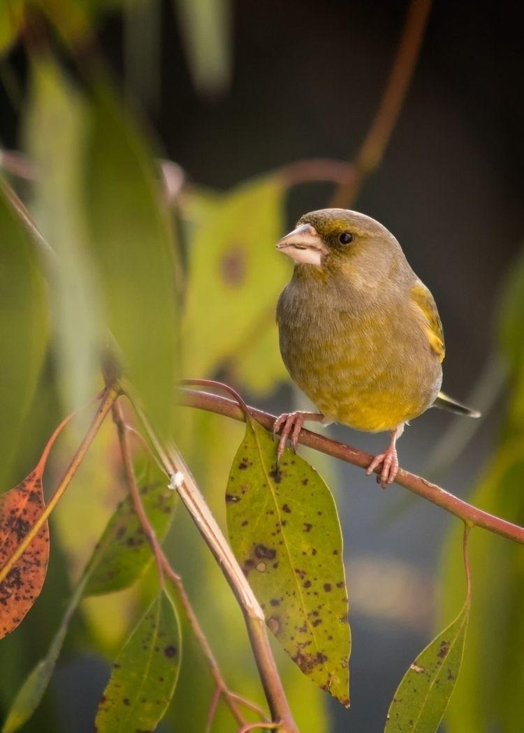 Garden Feeder Visitor - Nikon D - c_wal | ello