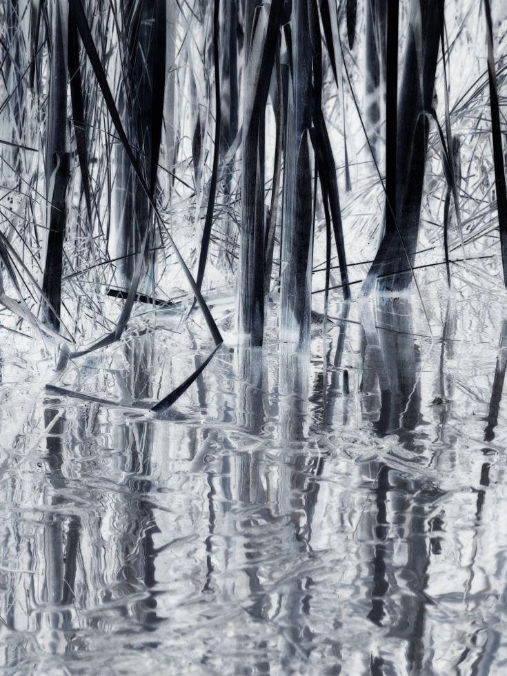 reeds grasses edge / swampland - voiceofsf | ello