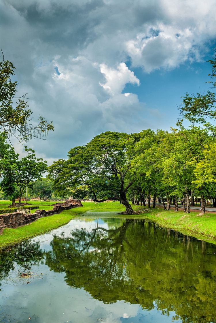thirsty tree City Sukhothai - Historic - christofkessemeier | ello