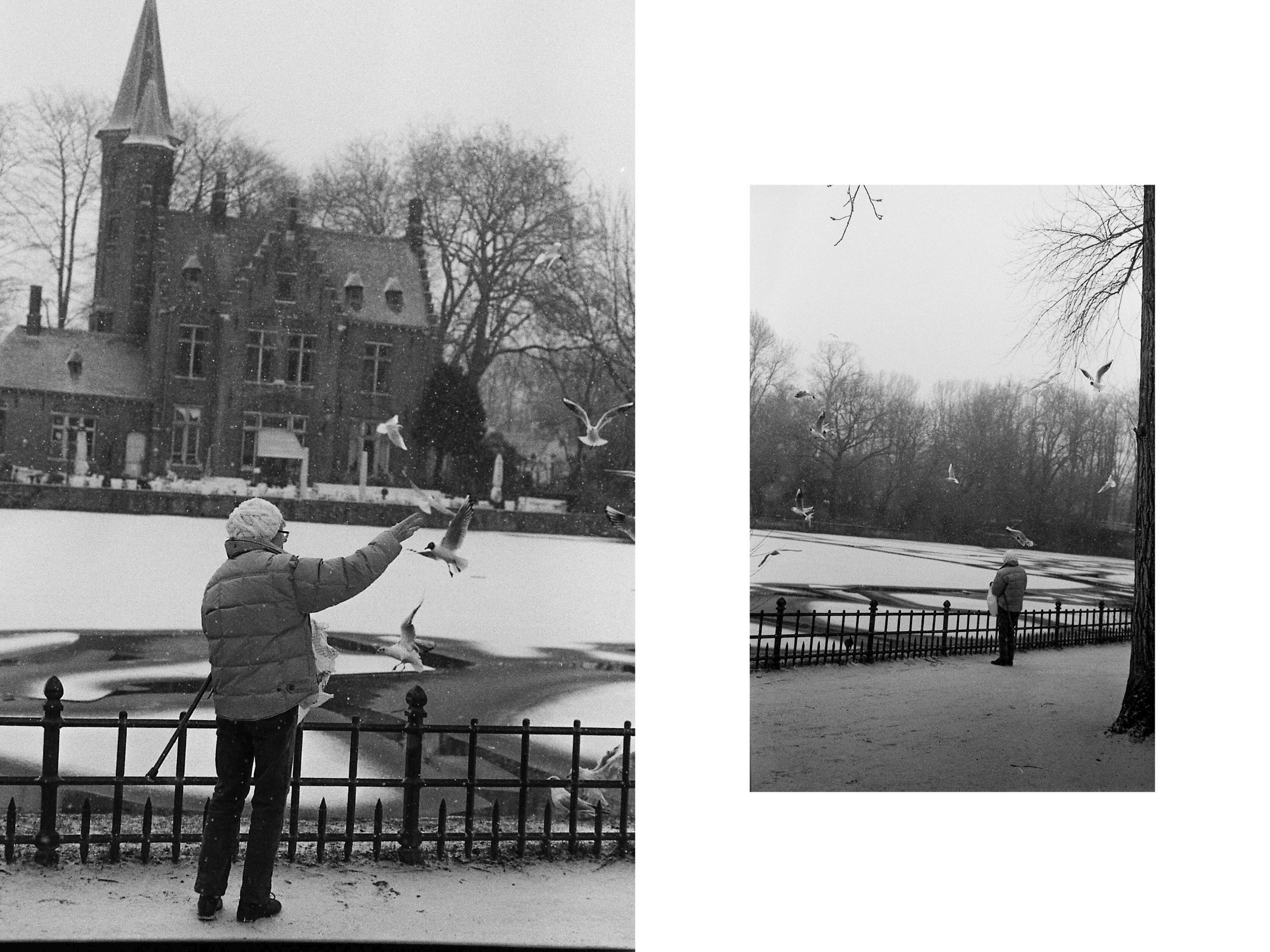 Feeding birds snowy day. Bruges - brecht_vanhoutte | ello