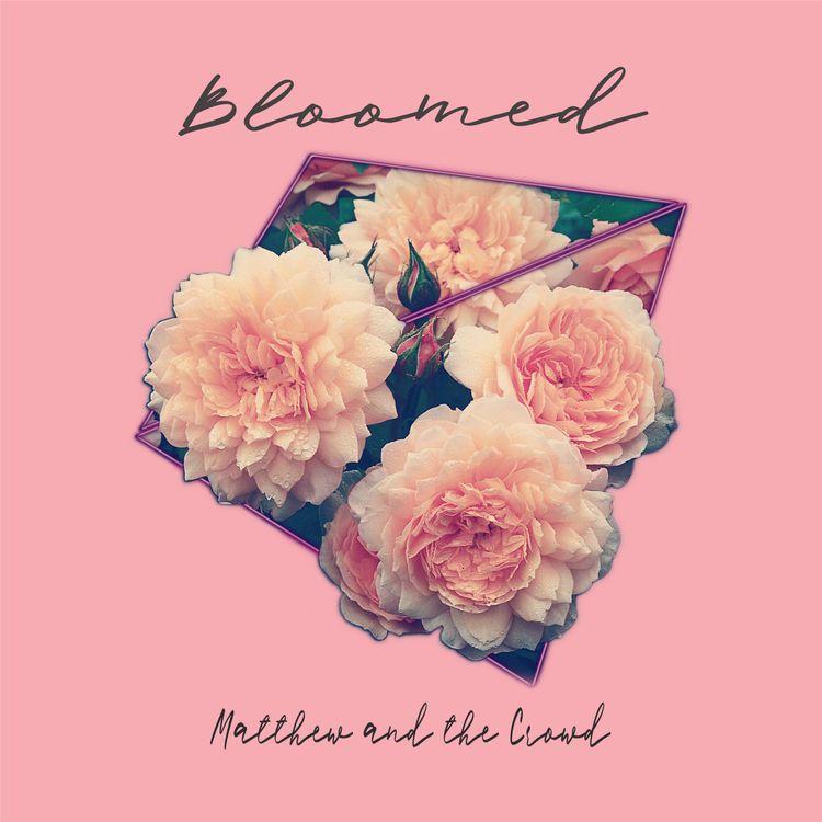 Bloomed è ora disponibile allo  - matthewandthecrowd | ello