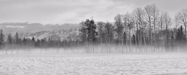 Misty Kootenay Mornings Novembe - camwmclean | ello
