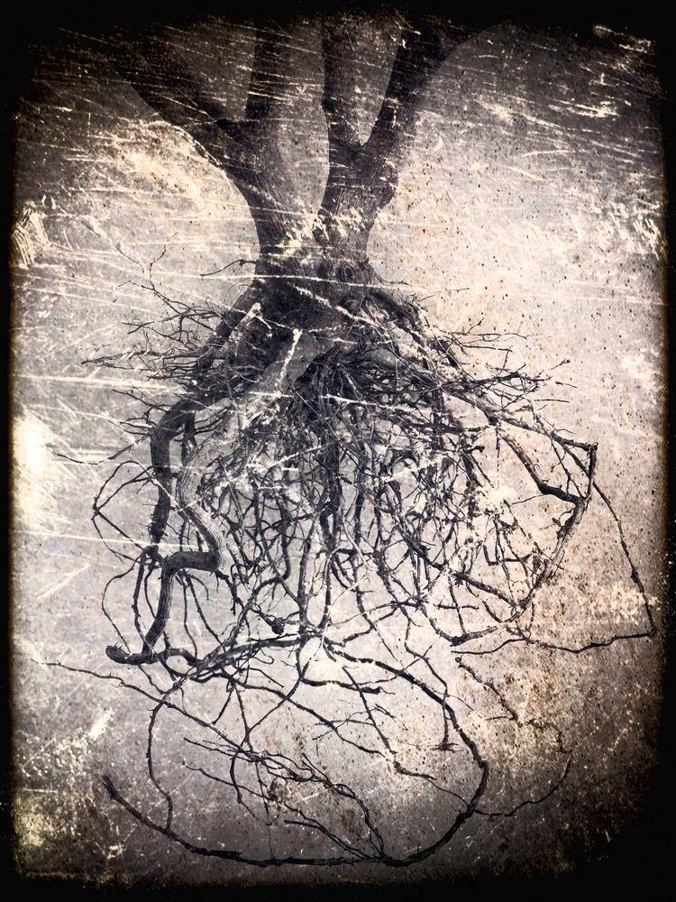 Datura Root. 2013 (3/5) Datura - phil_levene   ello