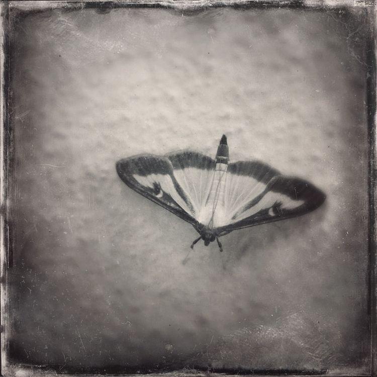 photography, blackandwhite, monochrome - serdart   ello