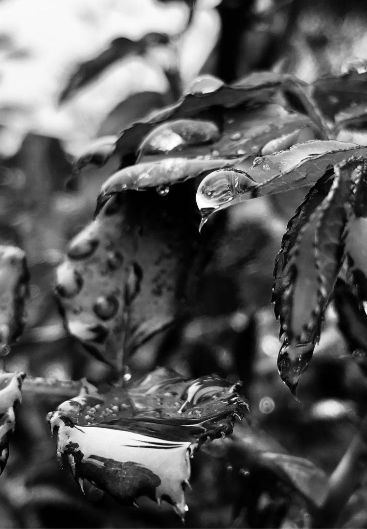hang trees, broken dying weep.  - dizyne | ello