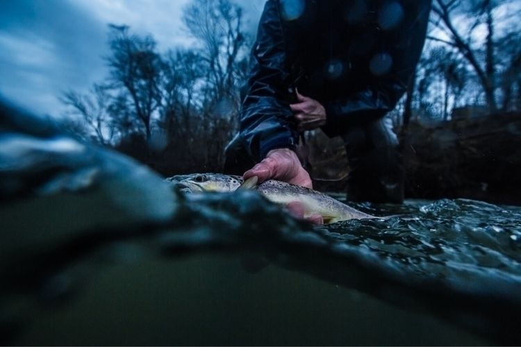 Release - browntrout, flyfishing - samdean | ello