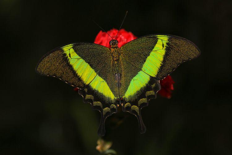 animal, nature, butterfly, colorful - mathiasdueber | ello