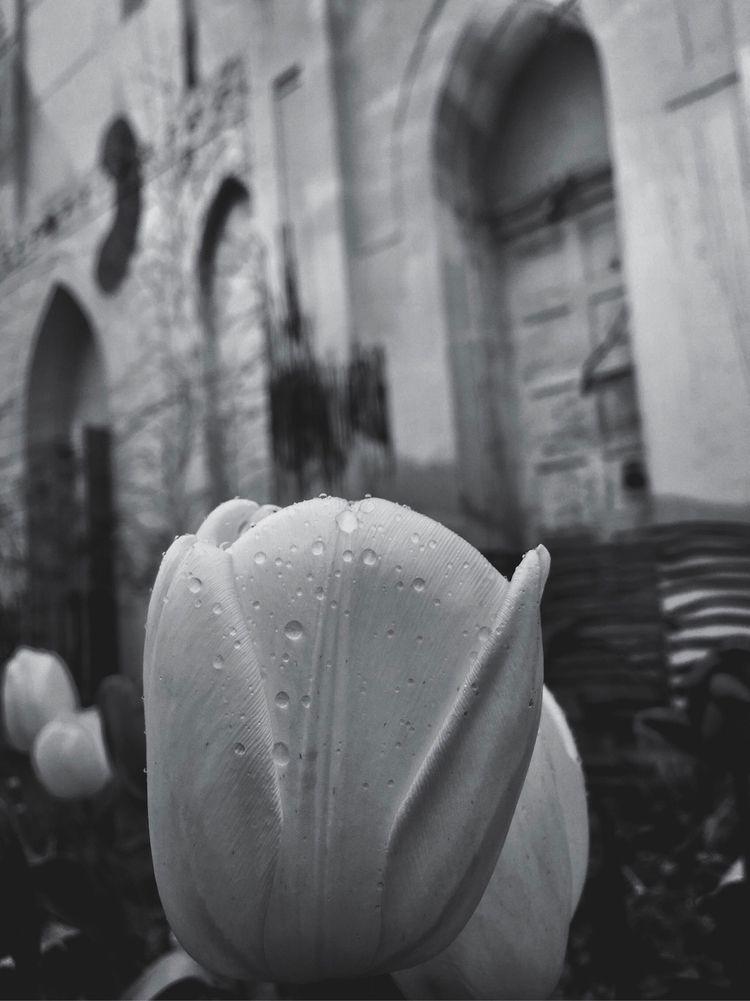 BNW Spring - ellophotography, blackandwhite - lali_olivia | ello