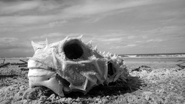 LEVIATAN - beach, ellophotography - jsuassuna | ello