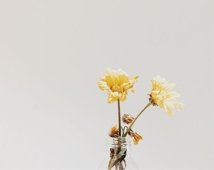 2 Melancholy Flowers - minimalis - hoornvlies | ello