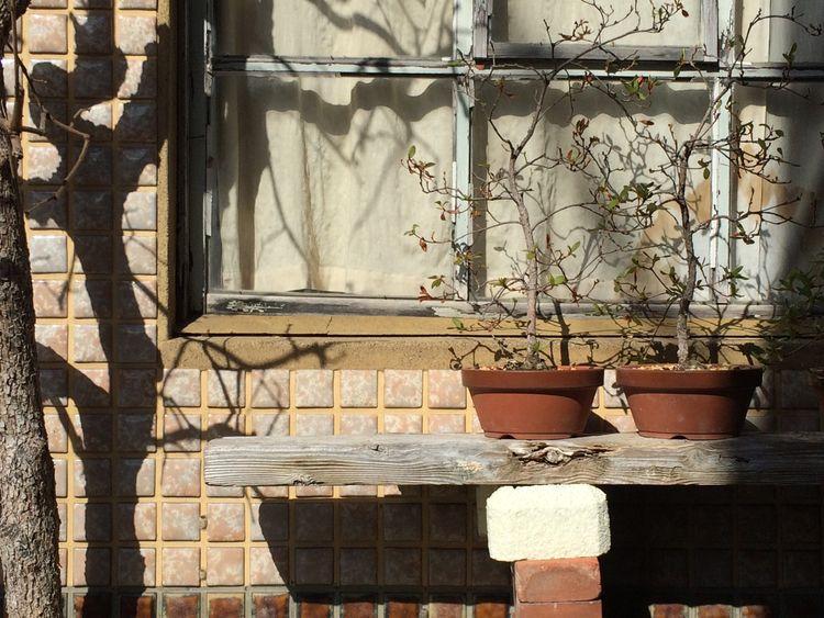 Plants spring sun - kyoto,, wood, - scokobro | ello