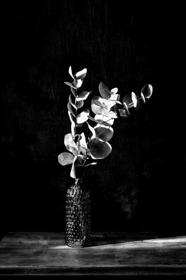 spotlight - photography, photographer - nataliabalanina | ello