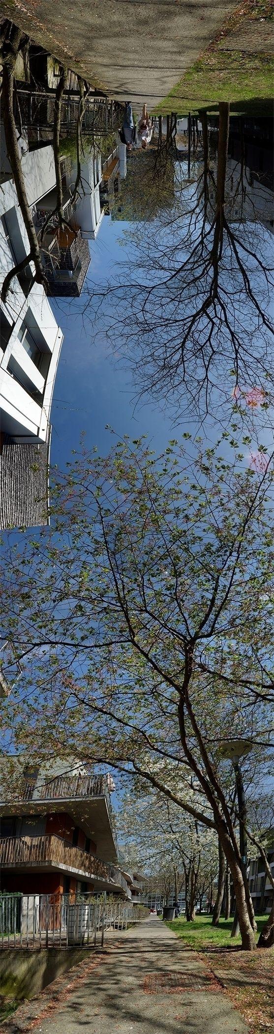 Ce jour les fleurs du cerisier  - gclavet | ello