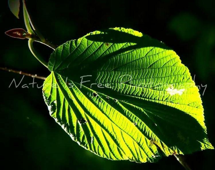 day leaf marvel day. ~Kenneth P - natureisfree | ello