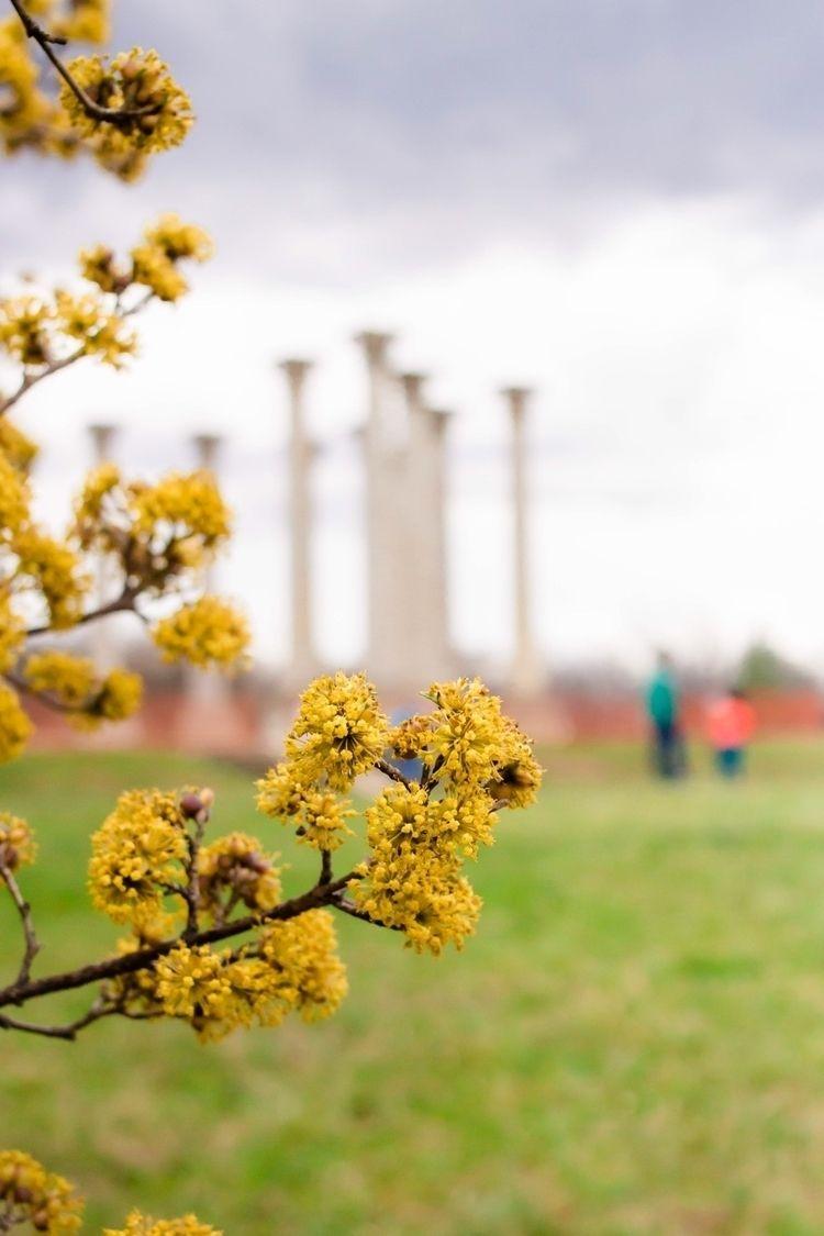 National Arboretum - streetphotography - lali_olivia | ello
