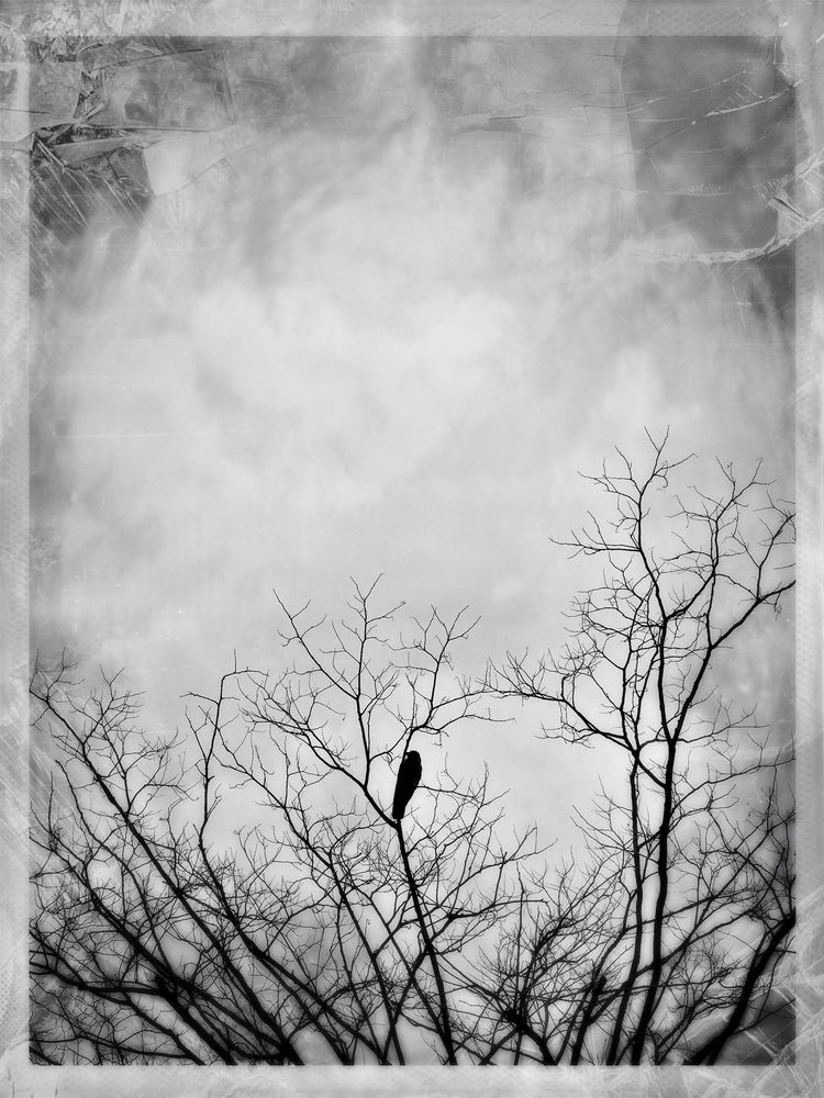 photography, mobilephotography - serdart   ello