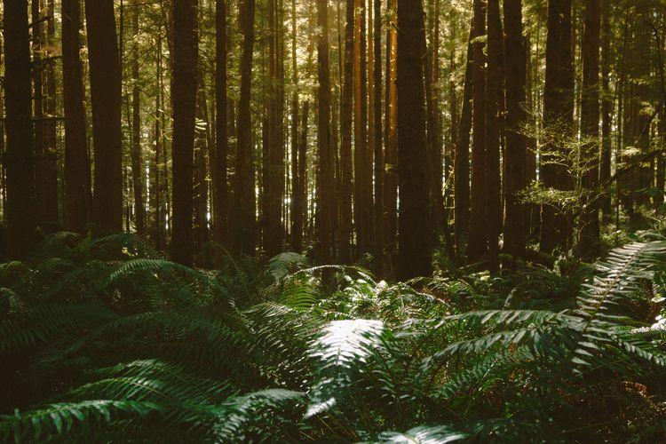Denseforest, rainforest, BC, Victoria - samcondy | ello