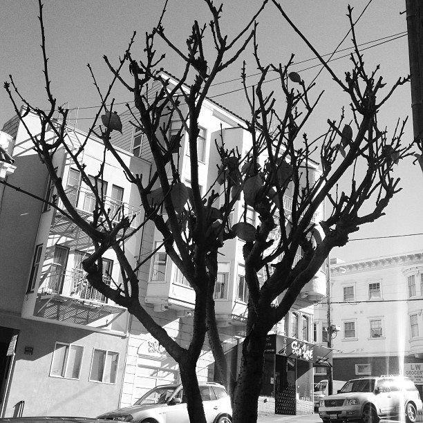 San Francisco, CA - hercuriouslens | ello