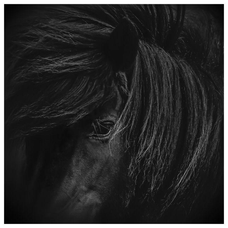 Black | Noir - photography, MurielleEtc - murielleetc | ello