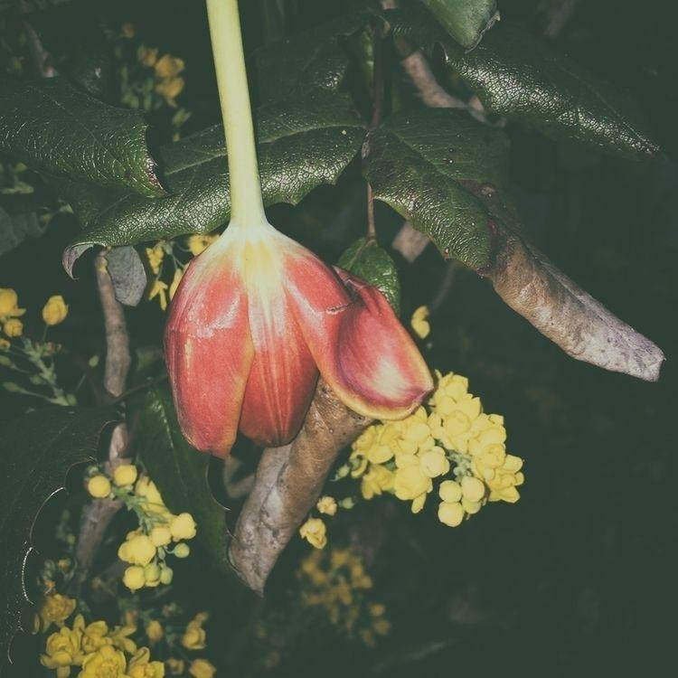 concede - photography, flower, plant - marcushammerschmitt | ello