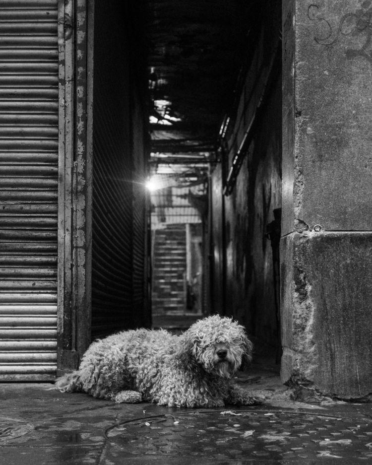 wrote post 365 days street phot - trovatten   ello