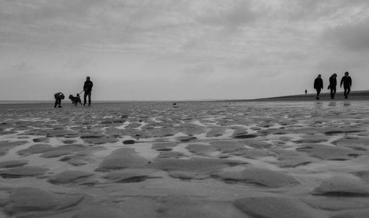 beach, beachlife, dog, dogphotography - georgie_pauwels | ello