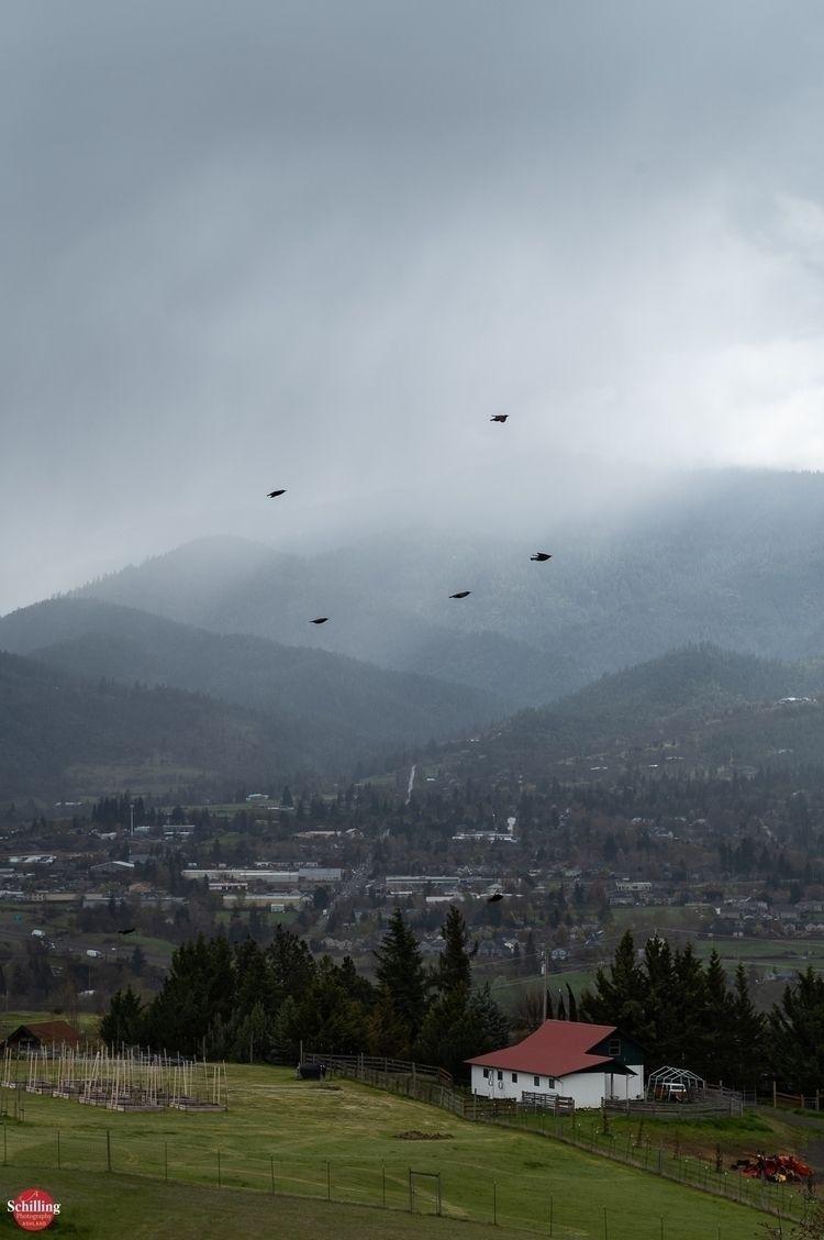 Springtime; Starlings Atmoshere - augustschilling | ello