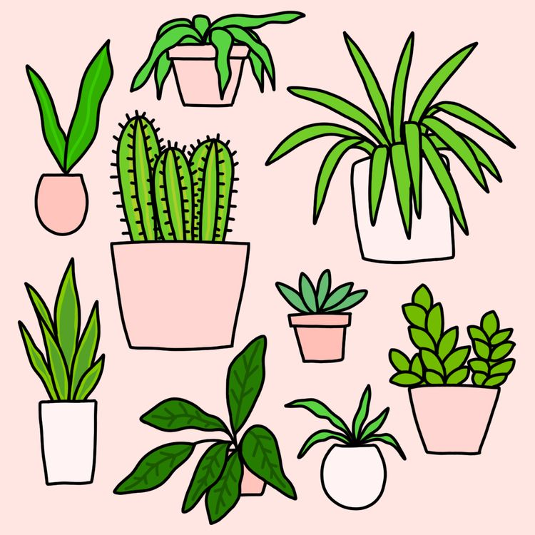 Plant Collection Day 29 - 30daysofplants - ashleighgreen | ello