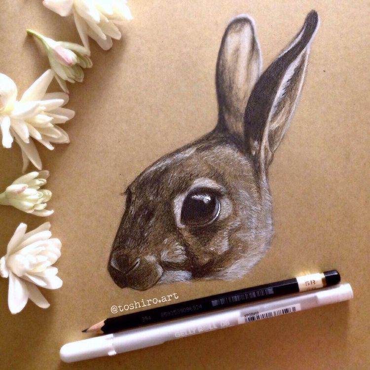 [rabbit - drawing, art, sketch, sketching - tooshiro | ello