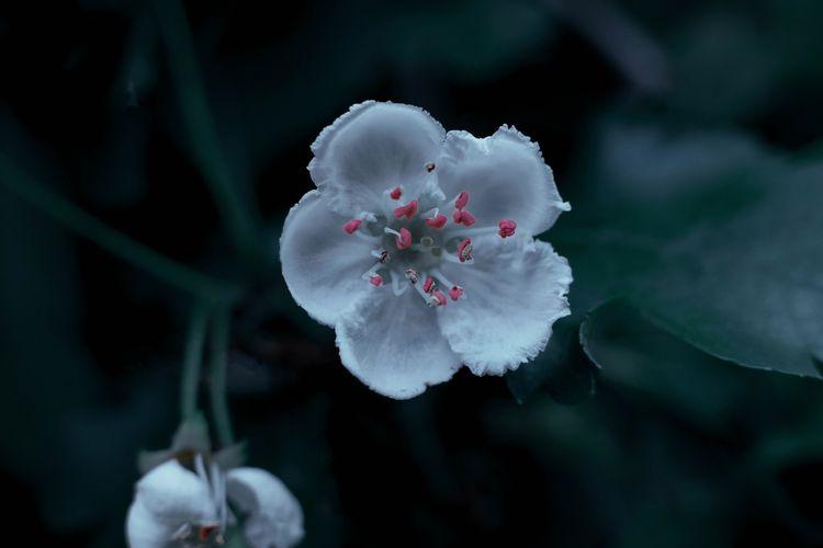 Spring blooms (Dark botanic, 20 - blvckwyrt | ello