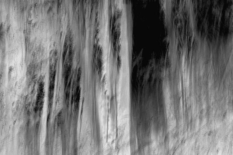 woodland spirits, black white a - voiceofsf | ello
